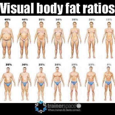Visceral Fat Men 14